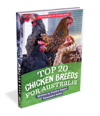 Top 20 Chicken Breeds for Australia